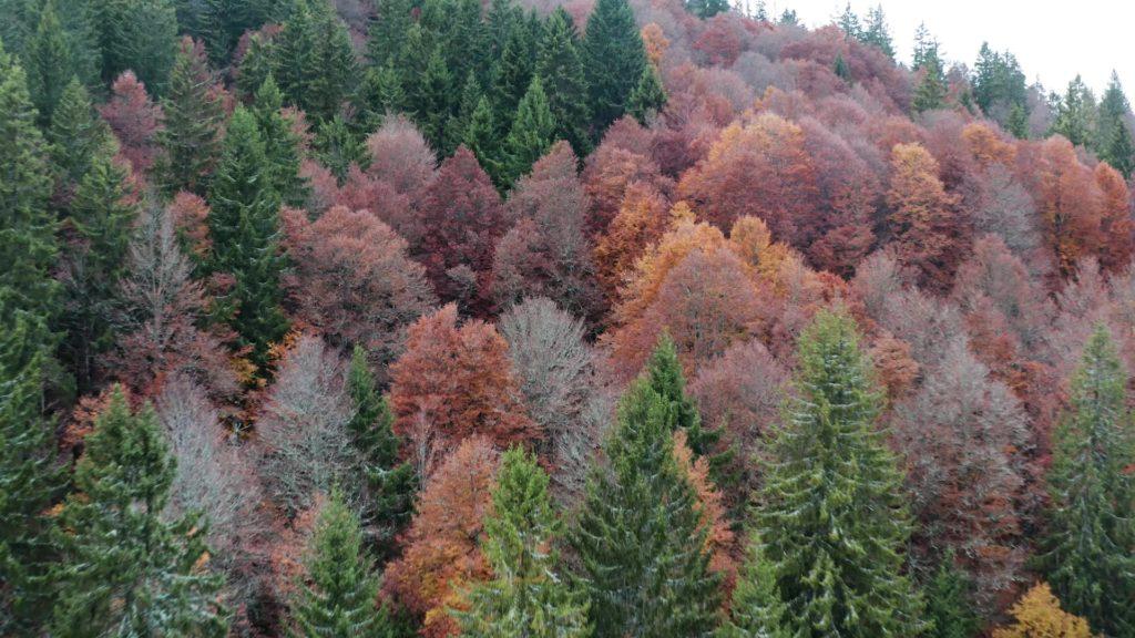 Digitales Forum zur Zukunft des Waldes